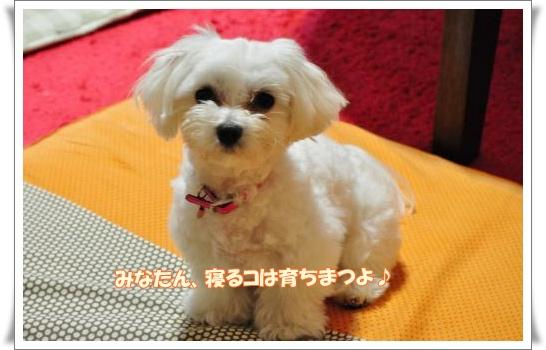 DSC_3876_convert_20110330213759.jpg