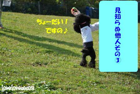 DSC_0621-cocoa.jpg