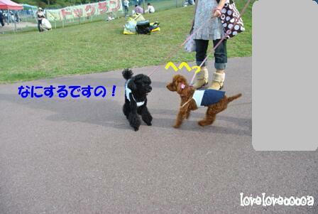DSC_0905-cocoa.jpg