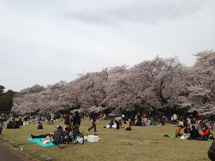 小金井公園1