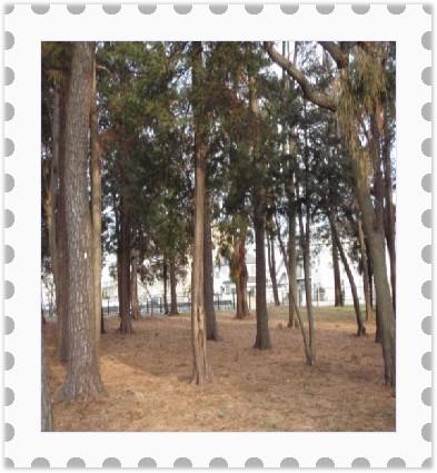 [stamp19144398]P2180205_convert_20120219143024