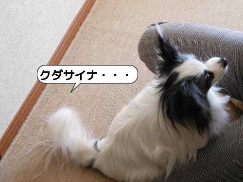 20120328_153033.jpg