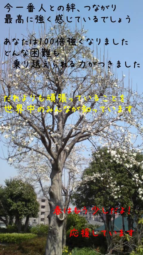 PAP_0088b.jpg