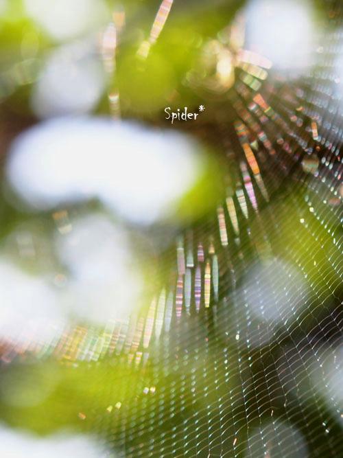 蜘蛛の巣3a