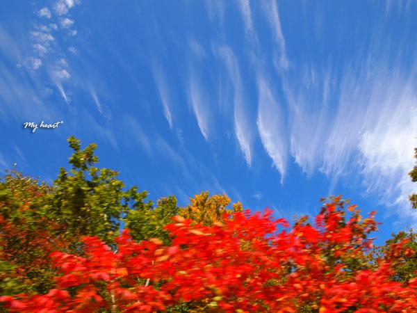 紅葉・雲2