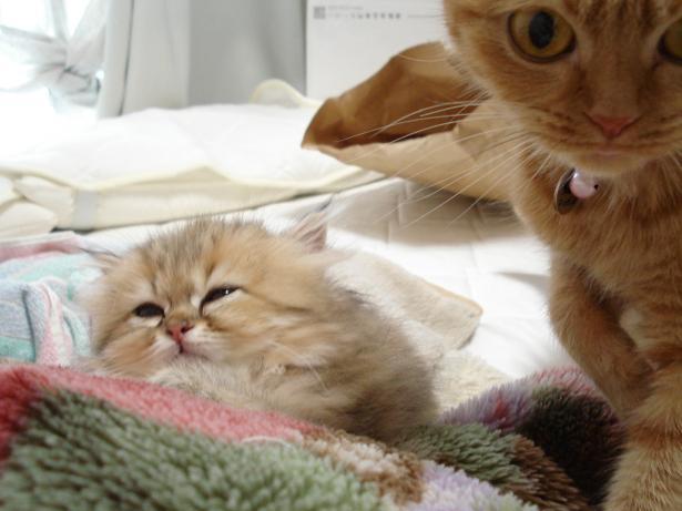ミル『寝てるよママ~』