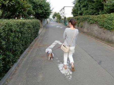 パールの散歩とかけまして…