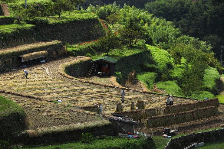 小畑の棚田
