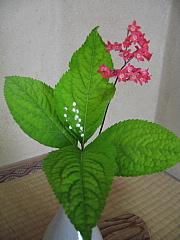 5,14お花