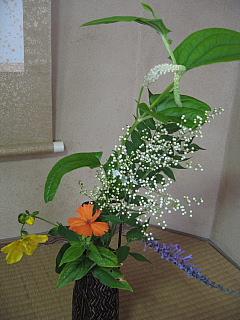 7月2日お花