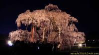 ライトアップされた三春滝桜(2010/04/24)