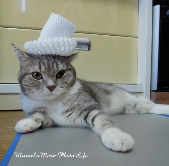120819ネット帽子