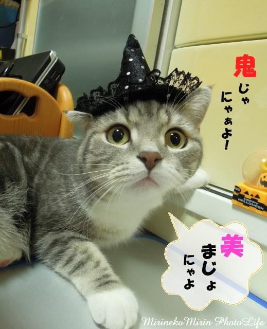 120831魔女猫1