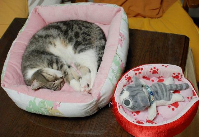 20121215まりんのベッド