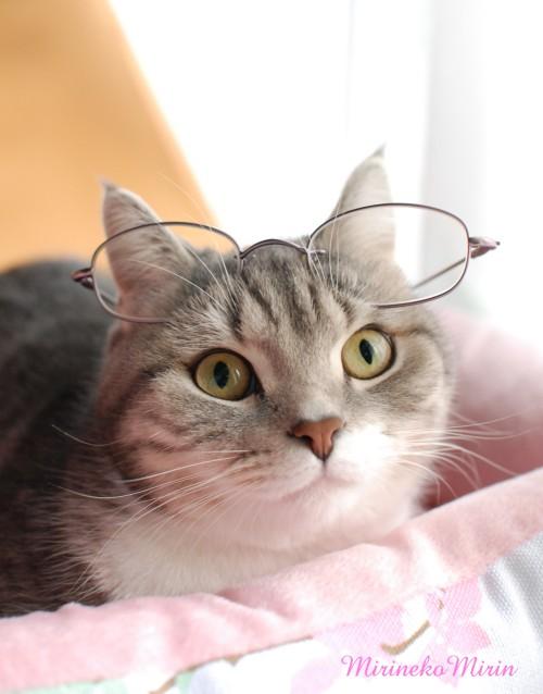 20121217まりんメガネ