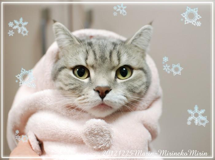 20121225まりんのクリスマス