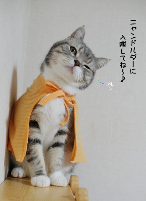 20130323まりんオレンジ3