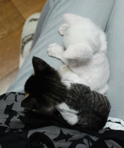 20130923くうしいお膝猫