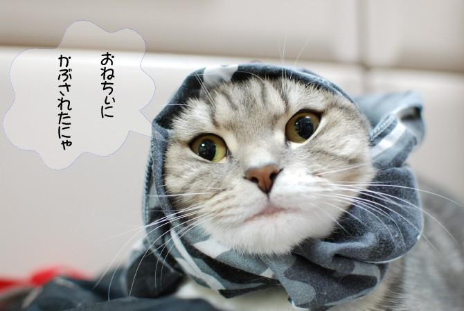 まりん20121101