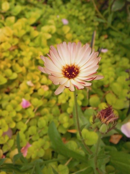イングリッシュガーデンの花1