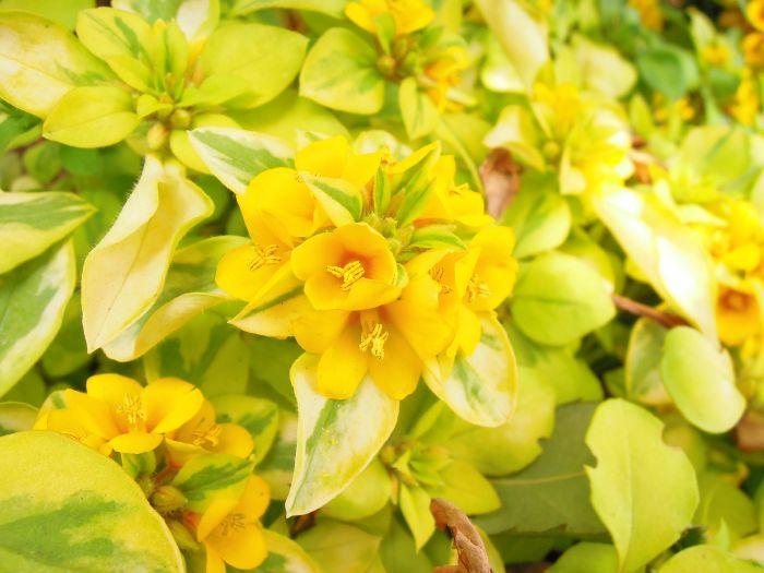イングリッシュガーデンの花2