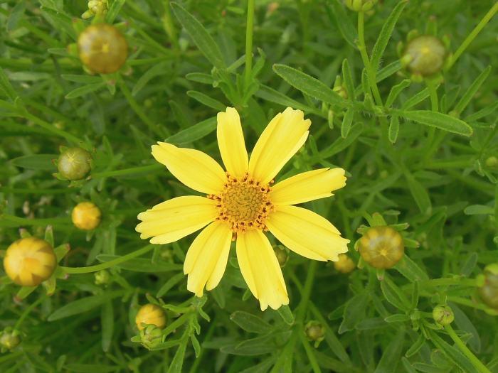 イングリッシュガーデンの花4
