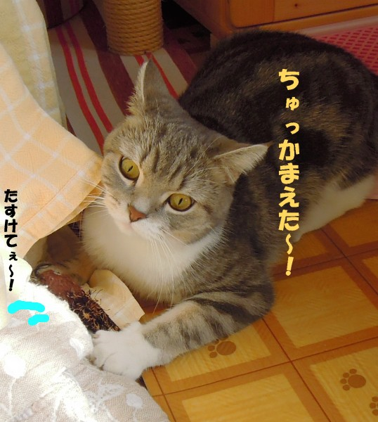 まりん2-20121108