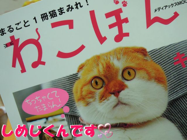 20121114しめじくん