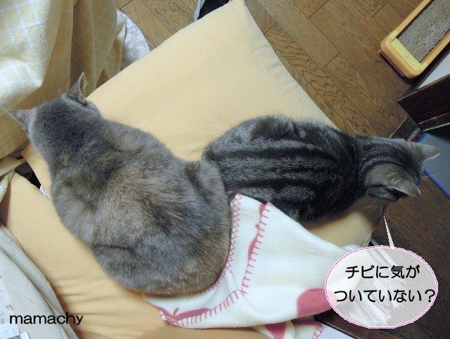 20121123チビ&まりん1