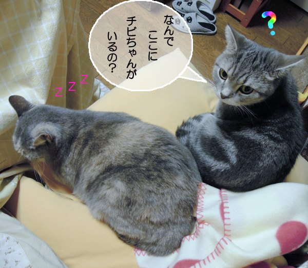 20121123チビ&まりん2