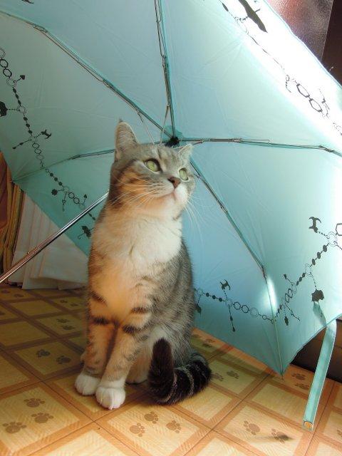 20121211まりんと傘