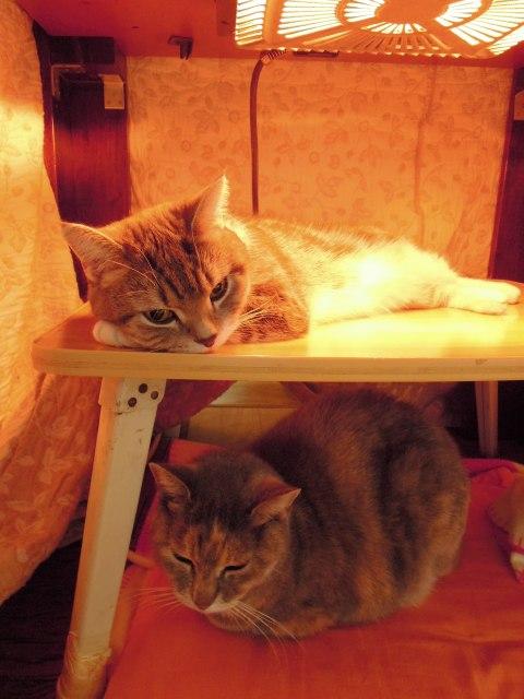 20121214こたつ猫