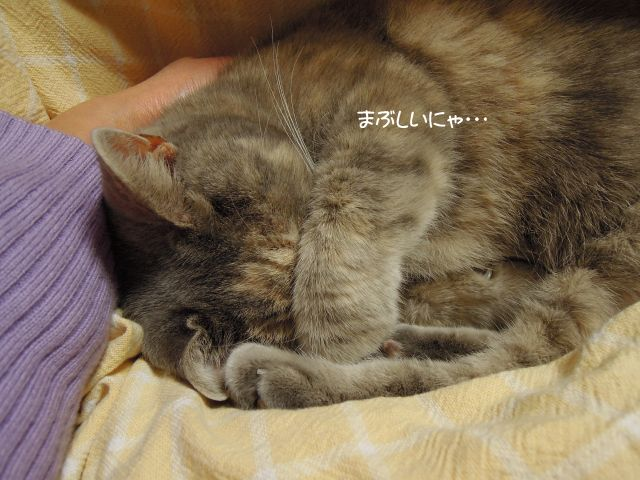 20121214膝猫チビ3