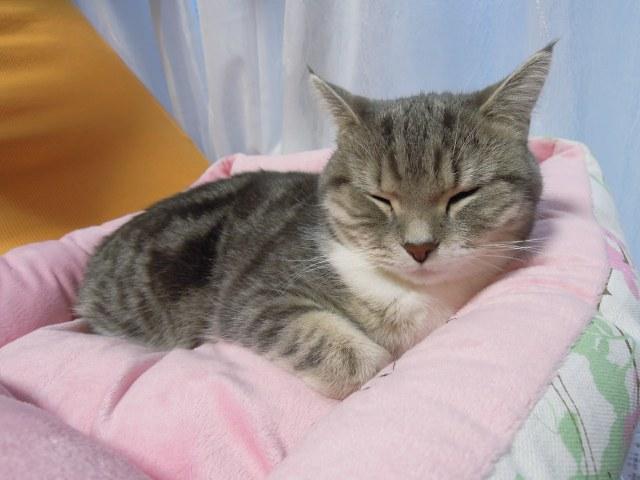 20121217まりん寝顔