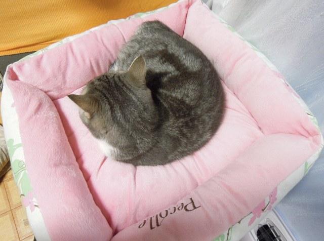 20121217まりんのベッド