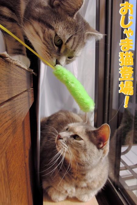 20121224お邪魔猫