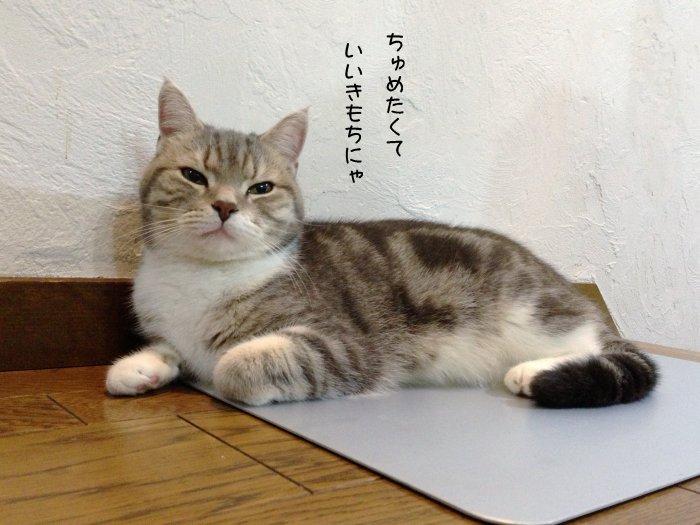 20130621ひえひえボード6