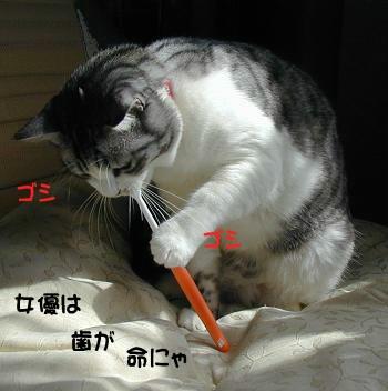 ミリンの歯磨き
