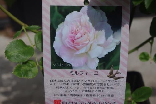 莠ャ謌・(5)_convert_20130522104558