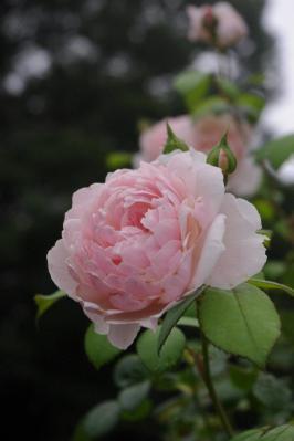 ウィズレー2008
