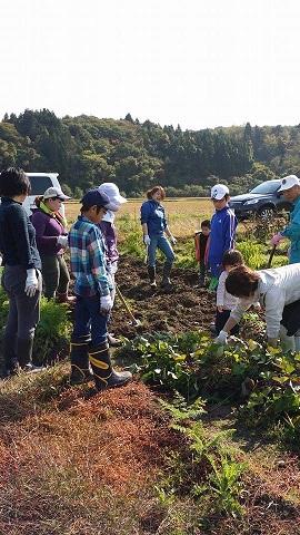 秋の収穫1