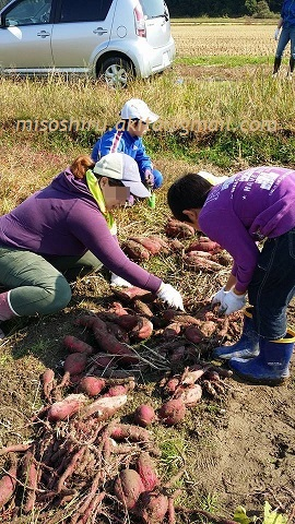 秋の収穫4