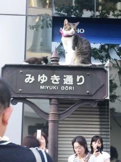 みゆき通りの猫