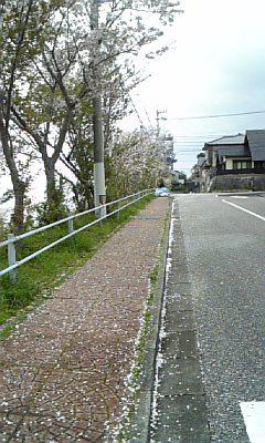 sakura1004061.jpg