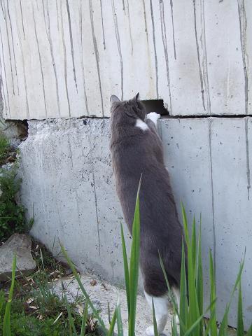 なんだこの穴は!?