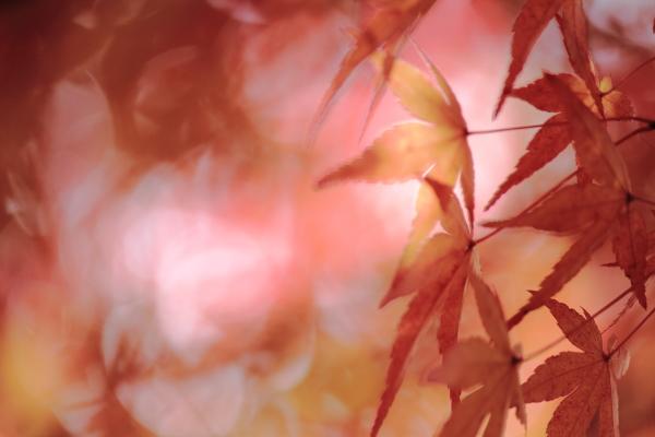 須磨 (7)