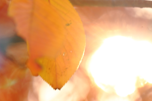 2014-11-20 異臭 (11)