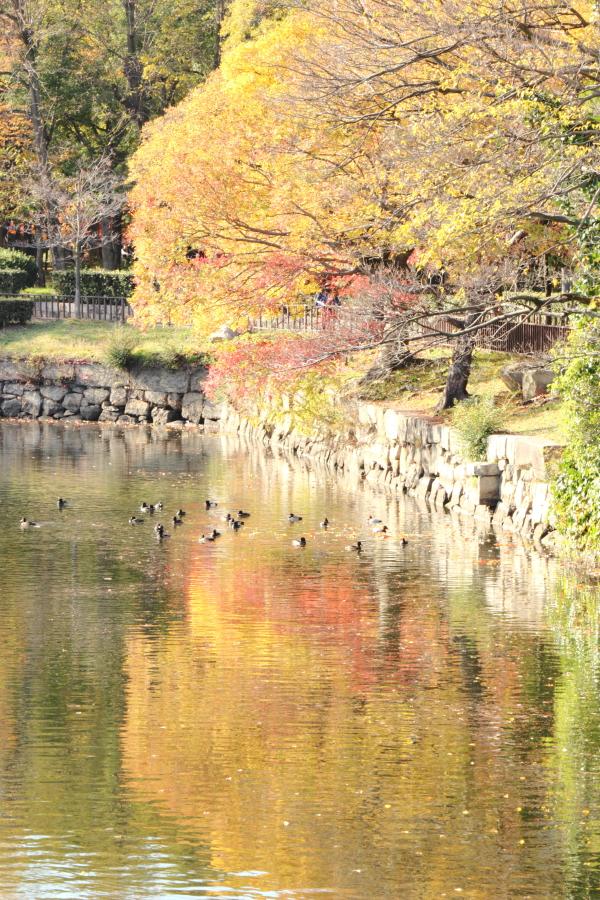 2014-11-20 異臭 (12)