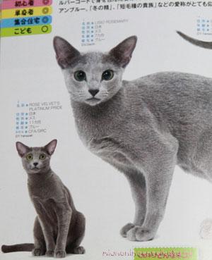 猫カタログ本