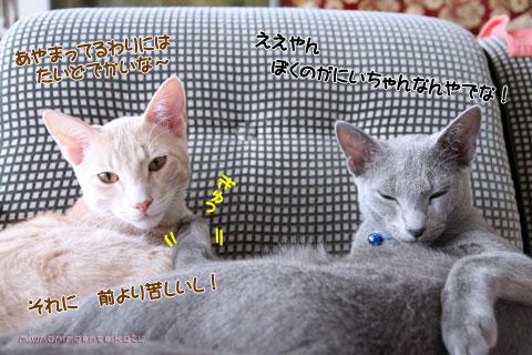 ちゃちゃ&スバル